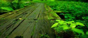 薪棚 屋根 勾配 湿地